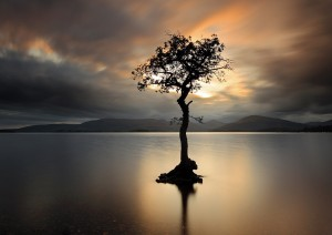Lone tree at Sunset, Milarrochy bay, Loch Lomond