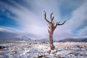 Lone Tree Glencoe