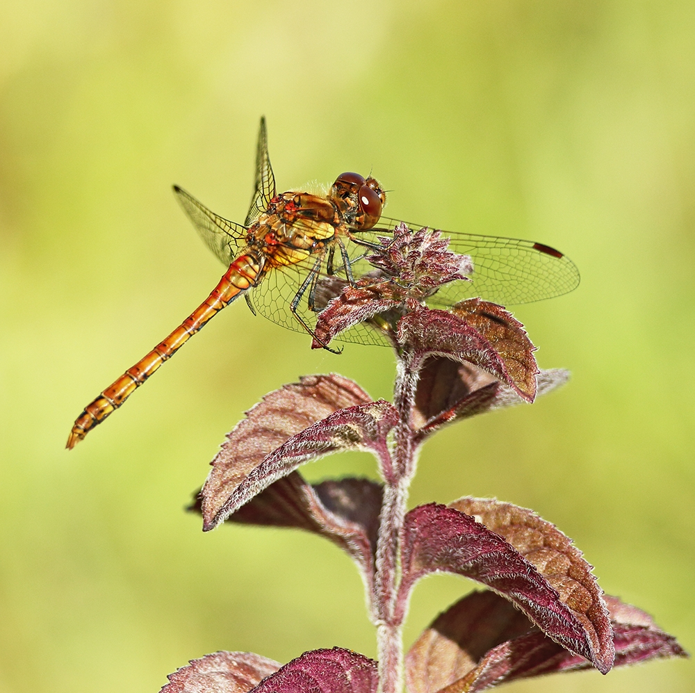 dragonfly wall art Archives - Scottish Landscape Photography by ...