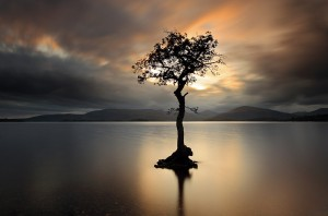 Lone tree in Loch Lomond
