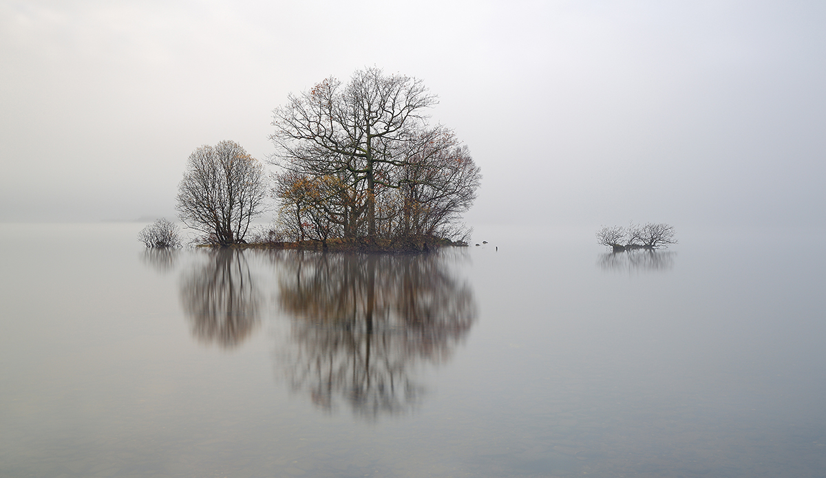 Lone trees shedding the last of their autumn leaves reflecting on the mist covered water of Loch Lomond